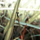 Red Tail Dragonfly by Komang