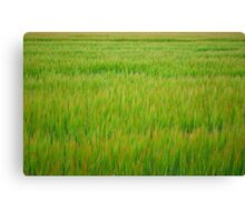 Young Field Canvas Print