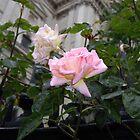 Rose in London by Rimma Tverskoy