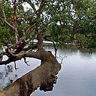 Horizontal Tree by Robert Abraham