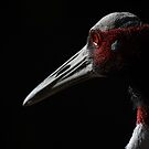 Crane by KatsEyePhoto