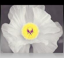Delicate Details by blackrose25