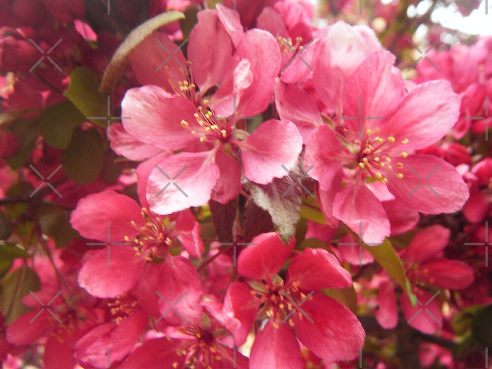 Pink Flower Blossoms by Rimma Tverskoy