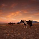 Painted Horse/Painted Sky by Kent Keller