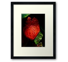 Red Elephant Ear Leaf Framed Print