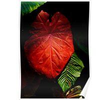 Red Elephant Ear Leaf Poster