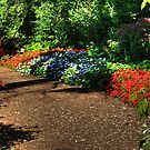 Up the Garden Path by Larry Trupp