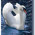 From an angry Swan's point of view by John44