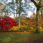 An Autumn Palette by trobe