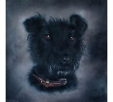 Patterdale Terrier. Photographic Print