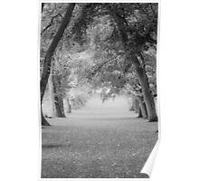 Tree path Poster