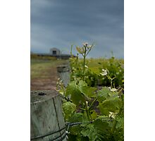 Pettavel Winery Photographic Print