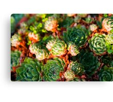 Plant bed Canvas Print