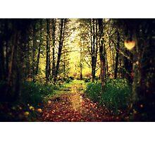 A rural walk Photographic Print