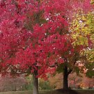It's Autumn Again by Gayle Dolinger