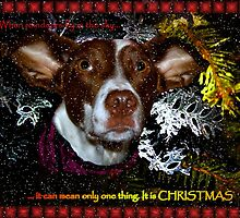 Dog christmas card by Tarolino