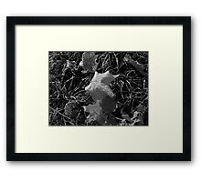You, me or nobody ain't never gonna hit as hard as life..it ain't about how hard you can hit..it is about how hard you can get hit and keep moving forward Framed Print