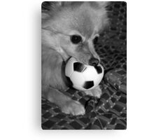 dont you come near my ball...... Canvas Print
