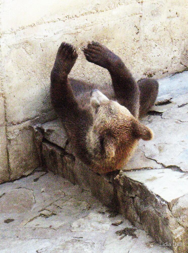 Baby bear exercises by Lidiya