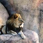 The King basking in the sun by kneff
