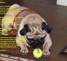Contentment poem with pug by prettymeadow