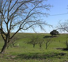 Pasture with trees by Sandra Gray