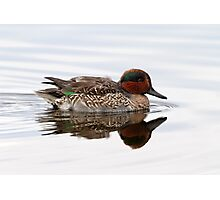 Reflecting On A Green Wing Teal Photographic Print