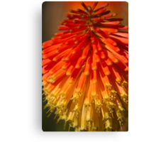 Red Hot Poker spike (flowerhead) Canvas Print