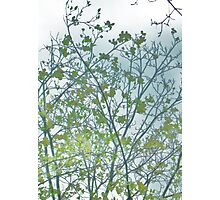 Dogwood I Photographic Print