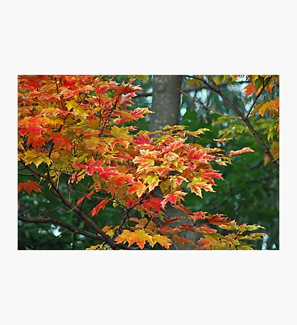 Many Coloured Leaves Photographic Print
