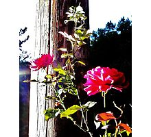 Charged Roses Photographic Print