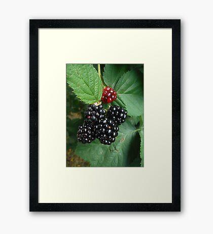 Berry Nice to Met You Framed Print