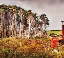 Reluctant Harvester by Karen Scrimes