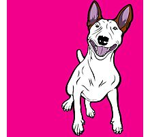 Excited Bull Terrier  Photographic Print