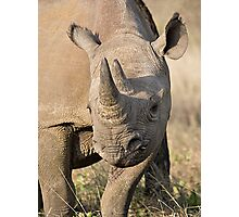 Black Rhino Close Up  Photographic Print