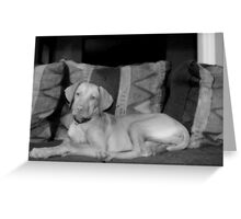 Anya, My Vizsla Greeting Card