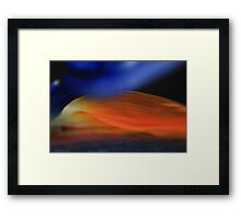 Strelitzia Morning-Bird of paradise bloom Framed Print