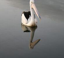 Pelican on a Mirror in Ohmas Bay by aussiebushstick