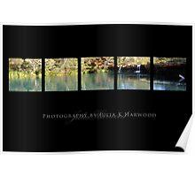 Fern Pool on Black ~ Signature Series Poster