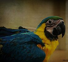 Parrot by Mattie Bryant