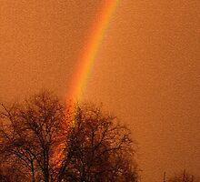 Rainbow Oak by the57man