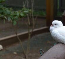 Little White Dove Sticker