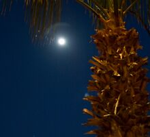 Cabo Moon by phil decocco
