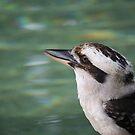 Australian Kookaburra by Patricia  Knowles