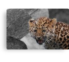 The First Growl Canvas Print