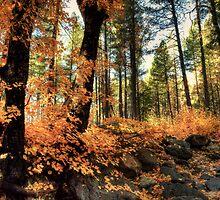 In The Woods  by Saija  Lehtonen