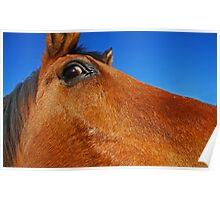 Equine Eye Poster