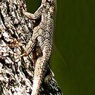 Lizards New Doo by Sandra Moore