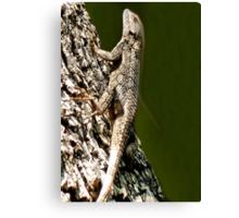 Lizards New Doo Canvas Print