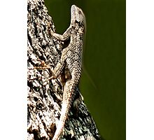 Lizards New Doo Photographic Print